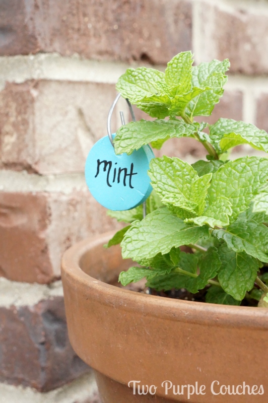 These would be so cute in my summer herb garden! -- DIY Herb Markers via www.twopurplecouches.com