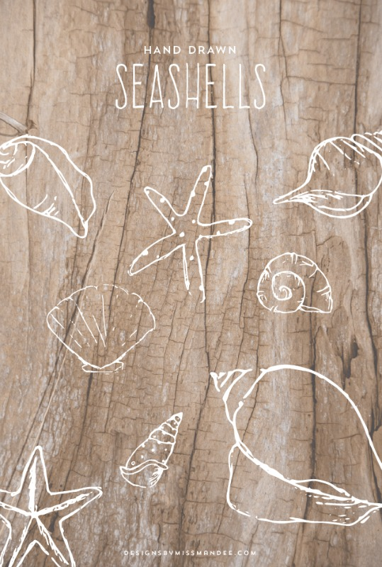 Creative Spark Link Party Most Clicked: Hand Drawn Seashells from Designs By Miss Mandee