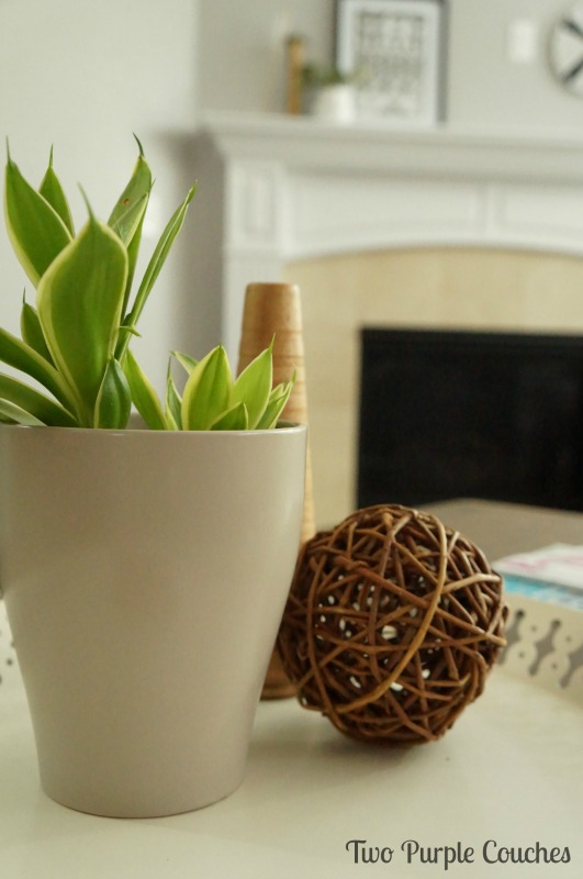 House plants are an easy way to add nature to your decorating