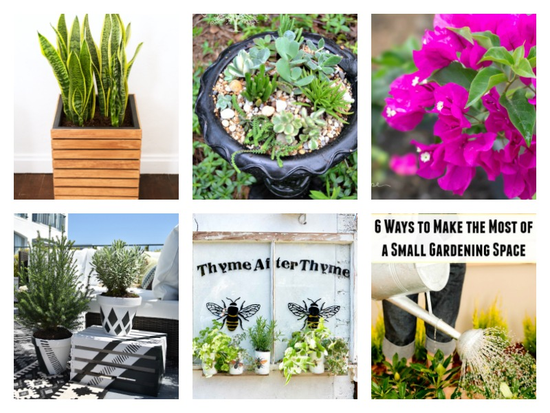 DIY Garden Ideas / Easy, budget-friendly and creative projects and ideas for backyard flower gardens and what to plant in your landscaping beds.
