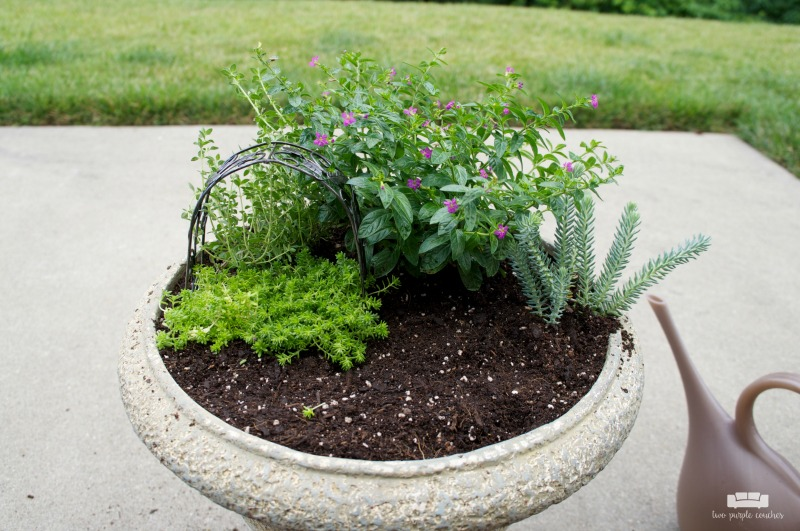 How to plant a container fairy garden