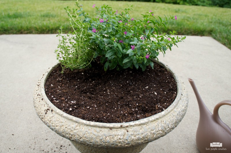 Planting a container fairy garden