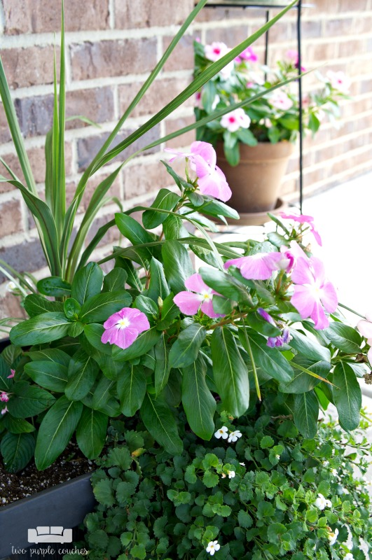 summer porch decor - container gardening ideas