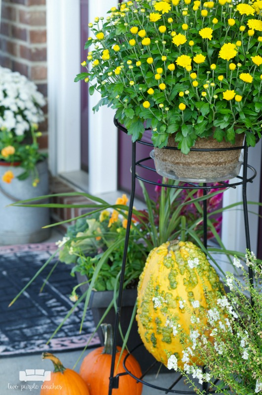 Pretty mums and colorful gourds on this fall porch.