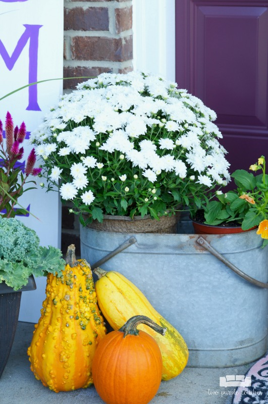 DIY Fall Porch Decor - fill a galvanized bucket with mums and pansies.