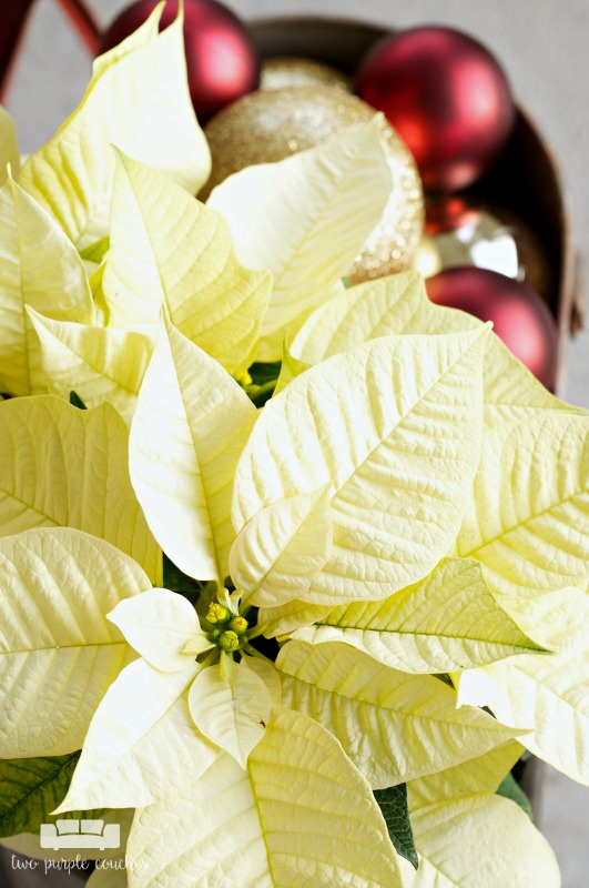 Gorgeous poinsettias on this holiday porch!