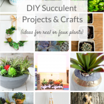Succulent projects for indoors and out. Fun and easy DIY succulents crafts ideas and tutorials for decor projects, gardens and more!