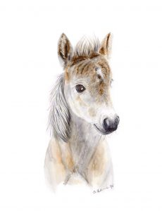 baby foal watercolor nursery print