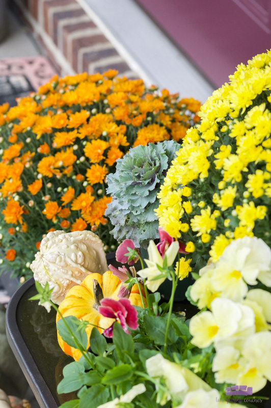 Beautiful, colorful display of mums and fall planters. Easy ideas for your outdoor front porch decorating.